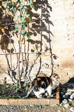 One of the many resident Alhambra cats